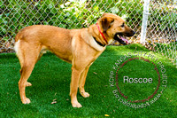 A20808363  Roscoe (2 of 2)