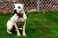 A21841851  DAIRY-1