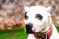 A21841851  DAIRY-2