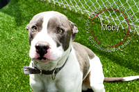 A22622518  Moby-1